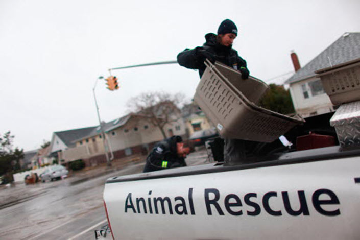 Animal Rescue Truck