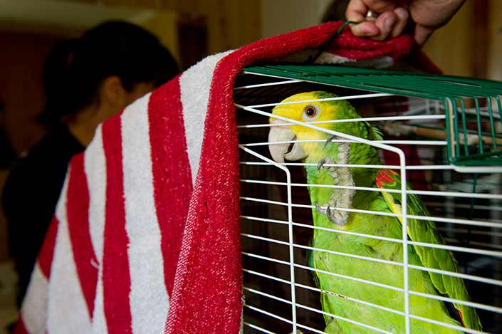 small bird in cage with blanket
