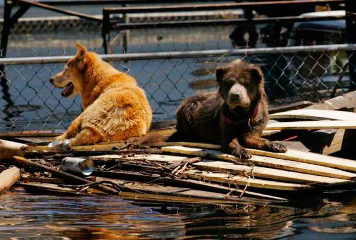Dogs-on-Raft-on-Cover